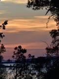 Soluppgång mångfärgad sjö och himmel till och med trädkontur Royaltyfria Bilder