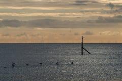 Soluppgång med de roosting fiskmåsarna royaltyfri fotografi