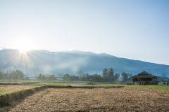 Soluppgång med den gröna risfältet i Pua, Thailand Arkivbild