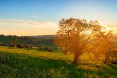 Soluppgång med det ensamma trädet Royaltyfri Foto