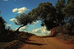 Soluppgång med det silhouetted trädet och damm arkivbild