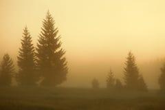 Soluppgång med en sikt på granträden i dimma Arkivbild