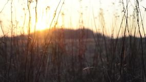 Soluppgång med flyttning i förgrund lager videofilmer