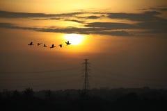 Soluppgång med höga spänningspoler Arkivfoton