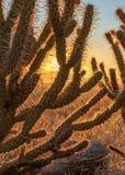Soluppgång med i den Anza Borrego ökendelstatsparken Arkivfoto