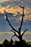 Soluppgång med skugga av ett träd Royaltyfri Bild