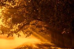 Soluppgång med strålar på bakgrunden av en dimmig mystisk bana I royaltyfri bild
