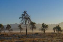 Soluppgång med träd Arkivbilder