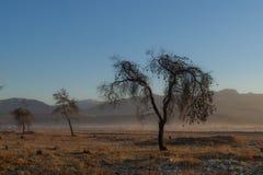 Soluppgång med träd Royaltyfria Foton