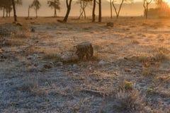Soluppgång med träd Royaltyfri Fotografi