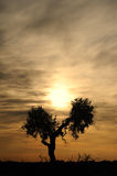 Soluppgång med treen Arkivbild