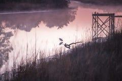 Soluppgång med Waterbird på ett salt träsk royaltyfria foton