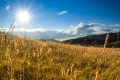 Soluppgång och soluppgång över ett härligt ljust gult fält av gräs royaltyfri fotografi