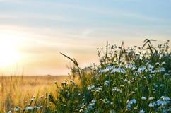 Soluppgång och blommor royaltyfri fotografi