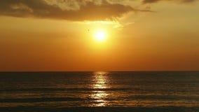 Soluppgång och hav stock video
