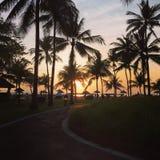 Soluppgång och palmträd i Bali Royaltyfri Bild