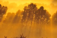 Soluppgång ovanför trädet i molnen Arkivfoton