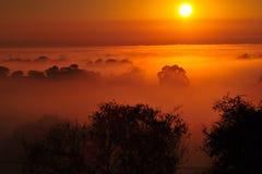 Soluppgång ovanför trädet i molnen Royaltyfri Bild