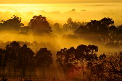 Soluppgång ovanför trädet i molnen Arkivbild