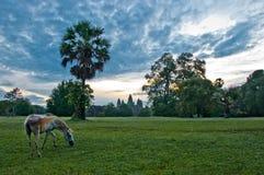Soluppgång på Angkor Wat Royaltyfria Bilder