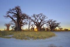 Soluppgång på Baines Baobabs Arkivfoton