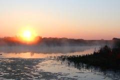 Soluppgång på den bevuxna sjön Morgonmist Arkivbilder