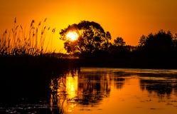 Soluppgång på den Biebrza floden royaltyfri bild