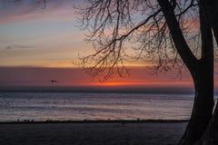 Soluppgång på den Pratt stranden med flygfiskmåsen, Chicago royaltyfria bilder