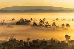 Soluppgång på den Thung Salaeng Luang nationalparken med mist i skogen, Phitsanuloken och Phetchabunen av Thailand arkivbild
