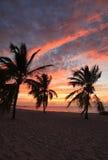 Soluppgång på det Smathers strandpasserandet royaltyfri fotografi