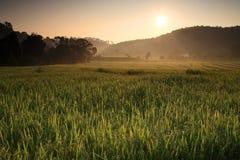 Soluppgång på det terrasserade ricefältet royaltyfri bild