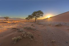 Soluppgång på dyn arkivbild