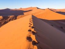 Soluppgång på dyn 45 i den Namib öknen, Namibia Royaltyfri Bild
