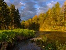 Soluppgång på en skogflod Arkivfoto
