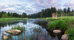 Soluppgång på en skogflod Royaltyfri Fotografi