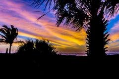 Soluppgång på en strand i ett karibiskt paradis med palmträd Royaltyfri Bild