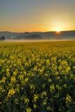 Soluppgång på fält med rapsen Royaltyfri Bild