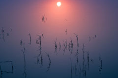 Soluppgång på fridsamt stående vatten Royaltyfria Foton