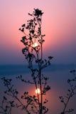 Soluppgång på fridsamt stående vatten Royaltyfri Foto
