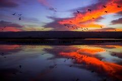 Soluppgång på Hula sjön parkerar Royaltyfri Bild