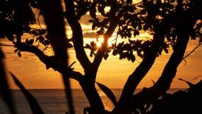 Soluppgång på Kalama - Kailua, Hawai'i Fotografering för Bildbyråer