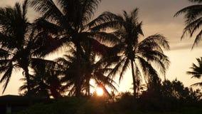 Soluppgång på Kalama - Kailua, Hawai'i Royaltyfria Foton