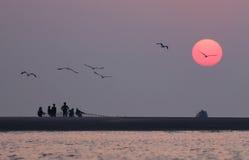 Soluppgång på kusten med flygfåglar Arkivbild