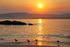 Soluppgång på La Mina Beach med silhouetted snäppor, Paracas Na arkivfoto