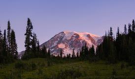 Soluppgång på Mt Rainier National Park Near Paradise royaltyfri bild