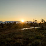 Soluppgång på myren Royaltyfri Fotografi