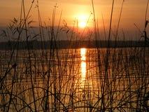 Soluppgång på sjön i sommarskog arkivfoton