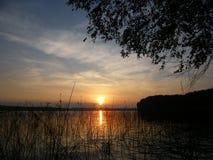 Soluppgång på sjön i sommarskog fotografering för bildbyråer