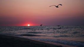 Soluppgång på stranden med flygseagulls arkivfilmer