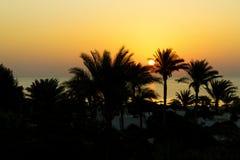 Soluppgång Röda havet, Egypten Royaltyfria Foton